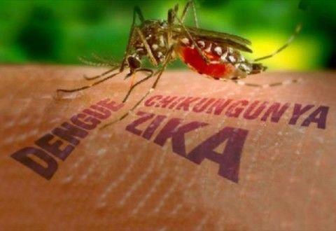 Cresce em 264% o número de casos de dengue no Brasil.