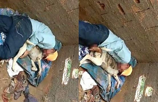 Homem é flagrado supostamente abusando de cadela na Bahia