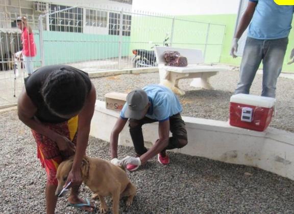 Campanha de vacinação contra raiva vai até 16 de outubro em Boa Vista do Tupim