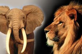 Caçador ilegal morre pisoteado por elefante e é devorado por leões.