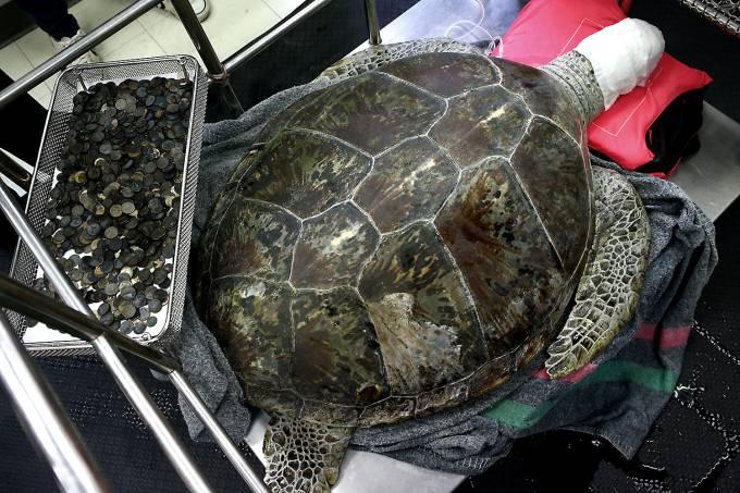 Veterinários acham mais de 900 moedas em estômago de tartaruga